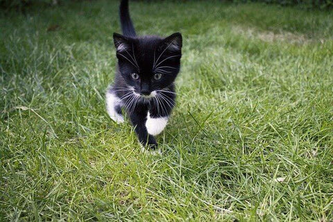 The NHS is a moving beast, represented here by a tiny kitten, on the prowl in the grass.