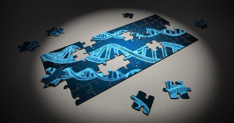 A jigsaw puzzle of a human DNA strand.