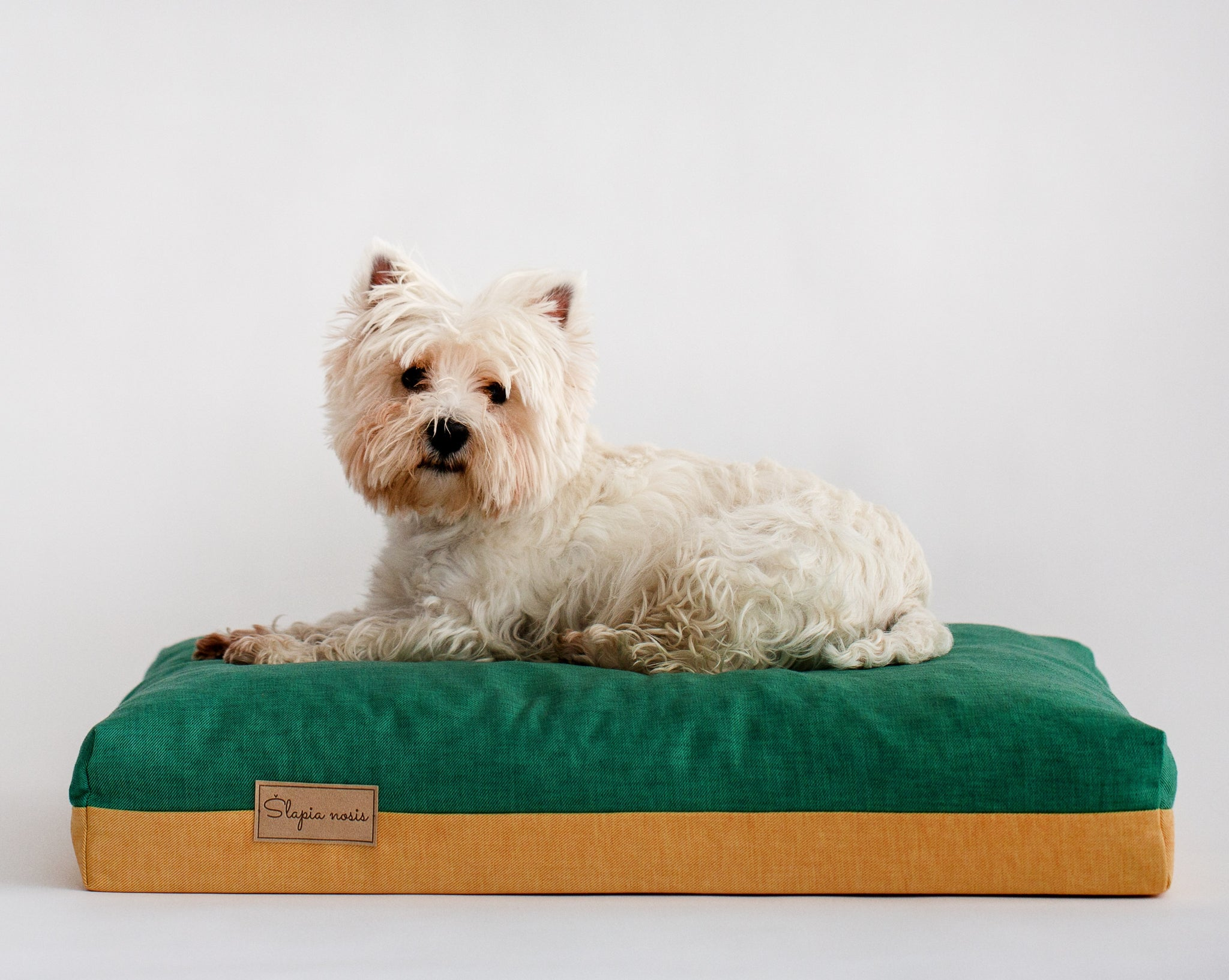 It is a West Highland White Terrier laying on a dog bed brand 'slapia nosis' wetnosedog. Šuns guolis 'šlapia nosis' ir šuo gulintis ant jo