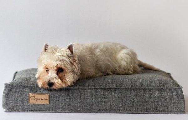 A westie dog laying on a dog bed wetnosedog brand new dog bed. Slapia nosis šuns guolis
