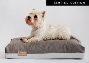 Limited edition dog bed with a dog laying on it