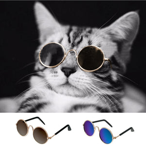 Fashion Cat | Sunglasses