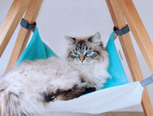 Hanging Out | Cat Chair