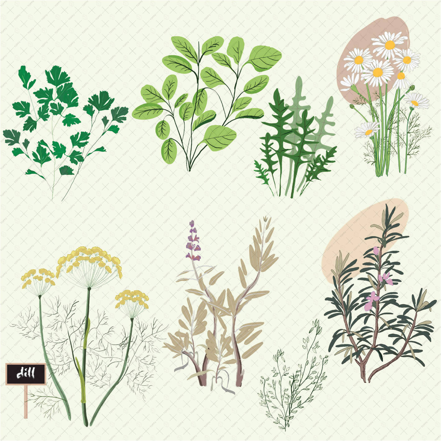 Flat Vector Herbs PNG - Toffu Co