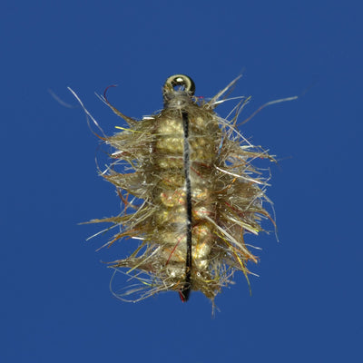 The Gut Sack Sow Bug