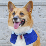 Capes -  Admiral Blue | Chinese New Year Edition - The Pet's Couture