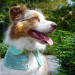 Capes -  Aquamarine Child | Chinese New Year Edition - The Pet's Couture