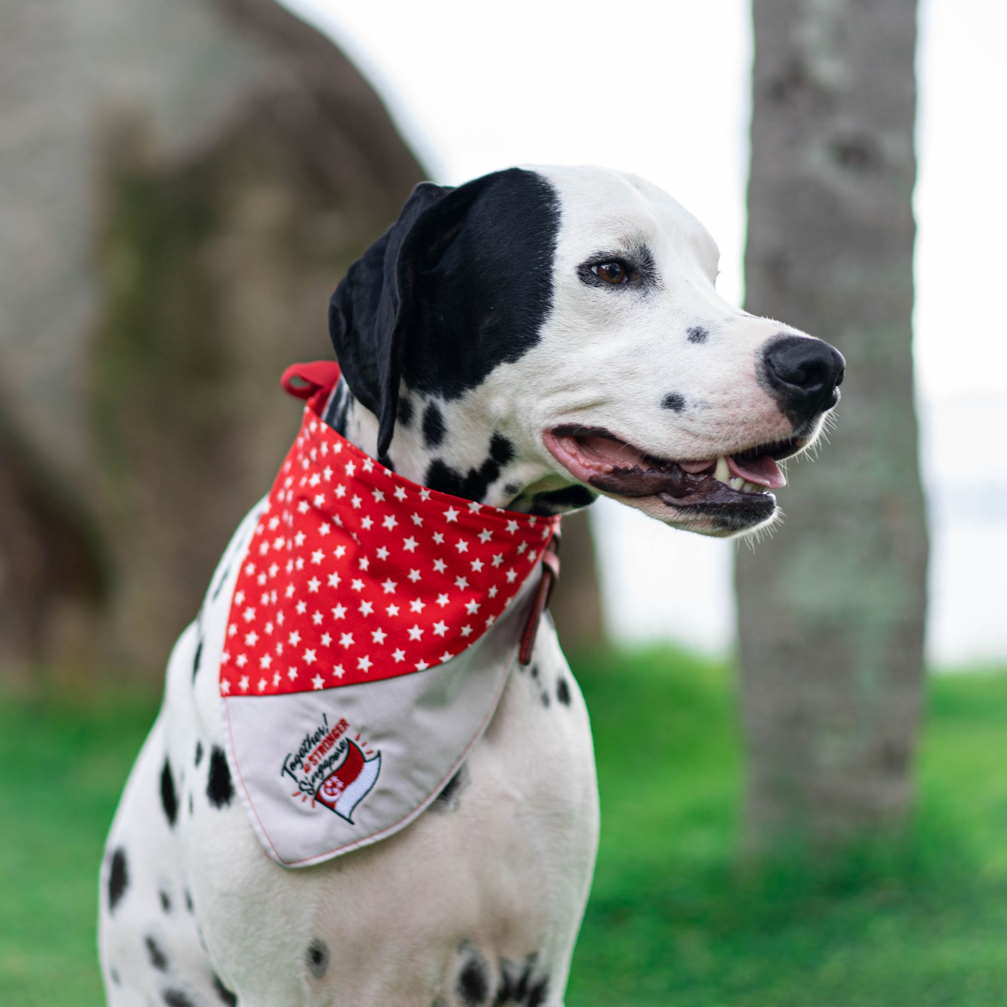 ND 2020 <Together A Stronger Singapore> Pet Bandana in Patriotic Grey - The Pet's Couture