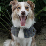 Capes - Charcoal Grey Tartan - The Pet's Couture