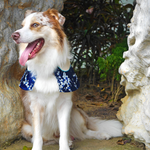 Capes -  Royal Sapphire | Chinese New Year Edition - The Pet's Couture