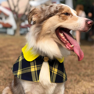 Capes - The Bumblebee - The Pet's Couture