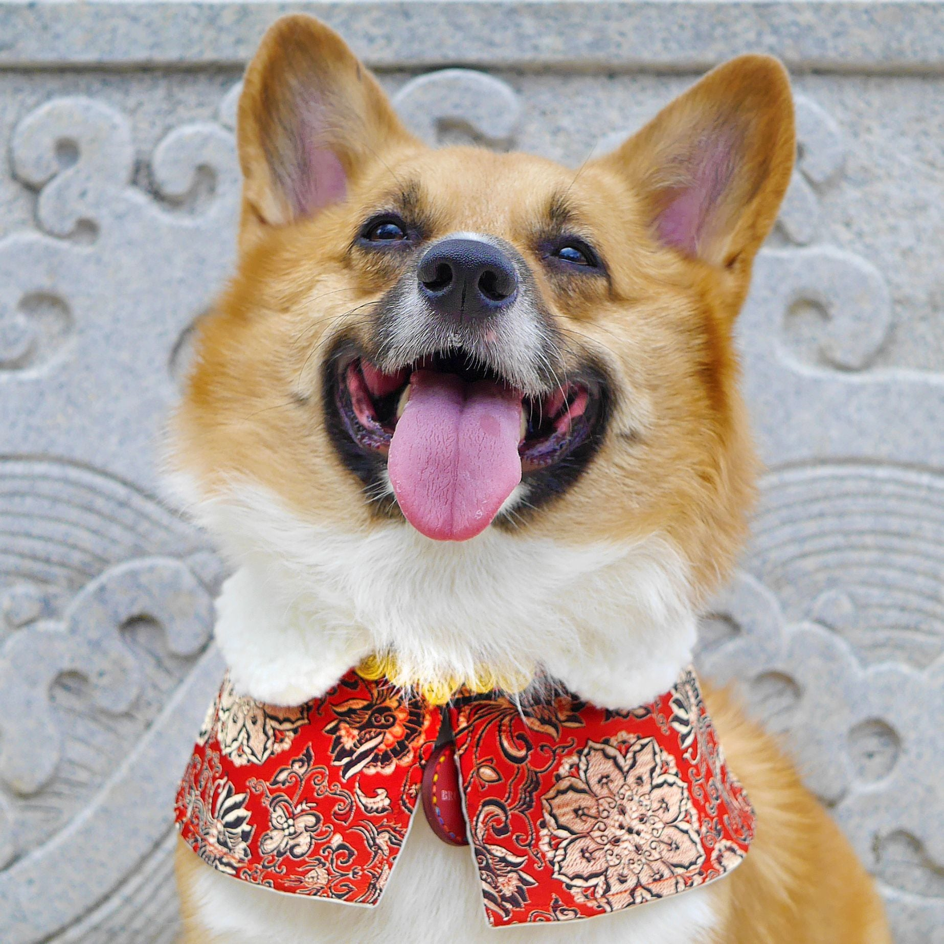 Capes -  The Red Baron | Chinese New Year Edition - The Pet's Couture