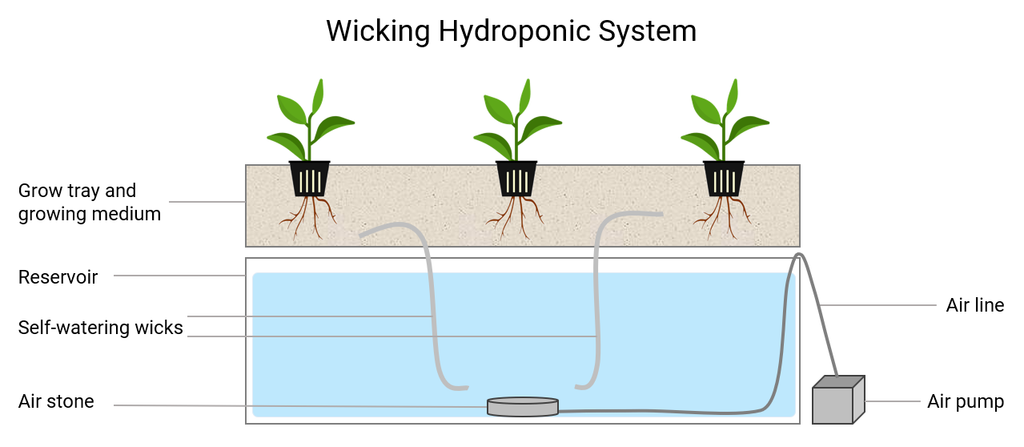 hydroponic vegetable nutrient solution