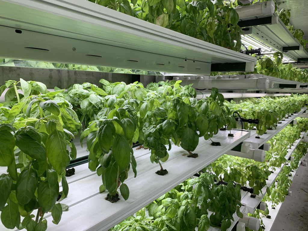 hydroponic nutrient solution