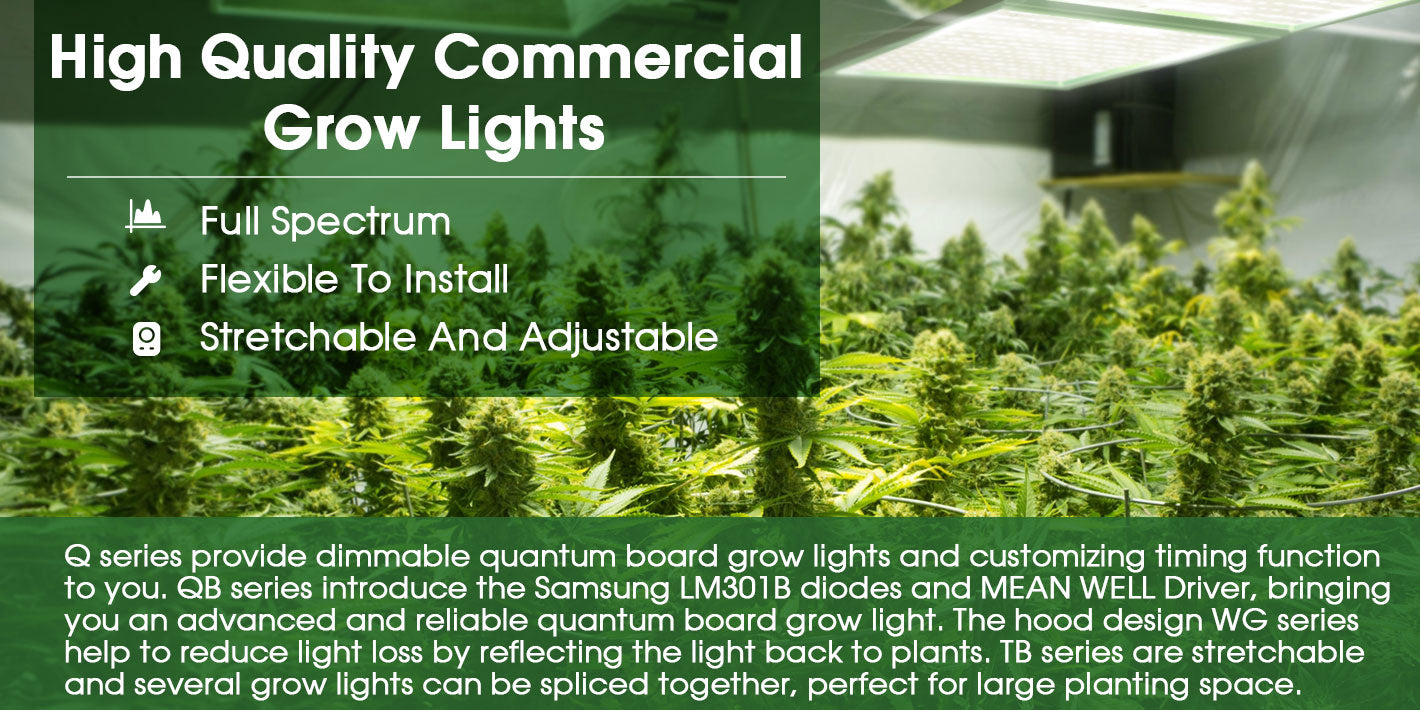 Q series provide dimmable quantum board grow lights and customizing timing function to you. QB series introduce the Samsung LM301B diodes and MEAN WELL Driver, bringing you an advanced and reliable quantum board grow light. The hood design WG series help to reduce light loss by reflecting the light back to plants. TB series are stretchable and several grow lights can be spliced together, perfect for large planting space.