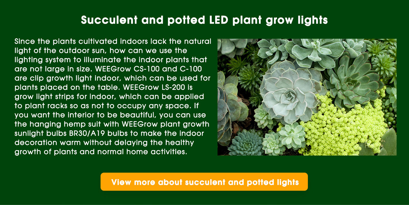 succulent and potted LED plant grow lights