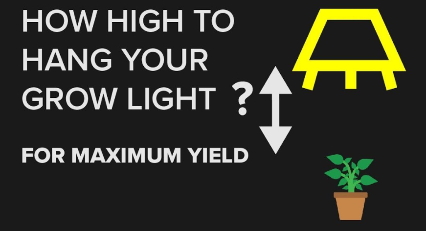 How to Adjust Light Intensity for Indoor Plants to Achieve Maximum Productivity