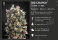 The Church Feminized 5 Pack