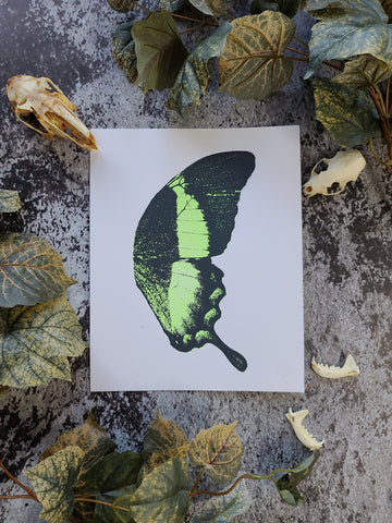 """Green Butterfly Wing"" Screenprint"