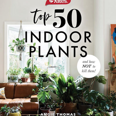 50 Indoor Plants & How Not To Kill Them - pod&seed online