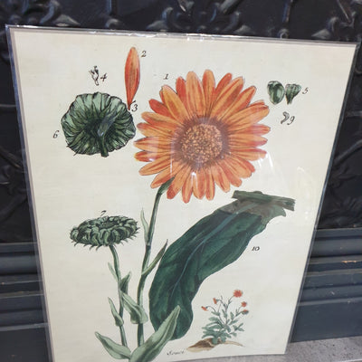 Botanical Prints - pod&seed online