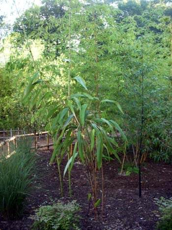 Bamboo at Turtle Back Zoo