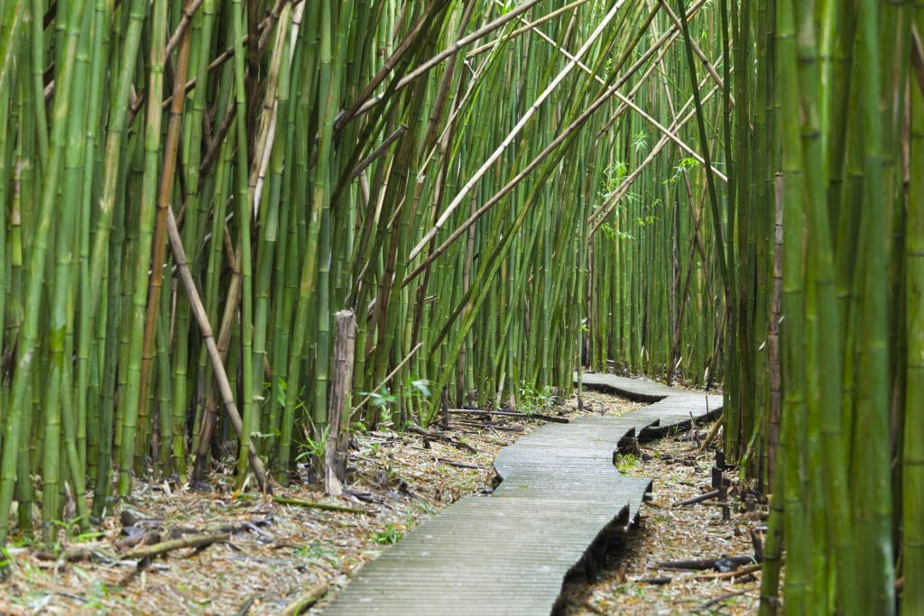 bamboo cane not lasting