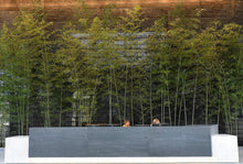 Load image into Gallery viewer, Indoor installation of Giant Gray bamboo