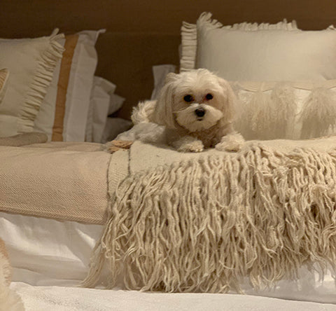Charlie the Maltese, our very own puppy mill survivor, spent five years as a breeder dog.