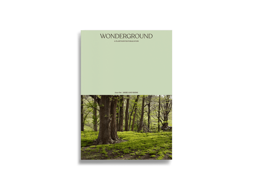 Wonderground Journal
