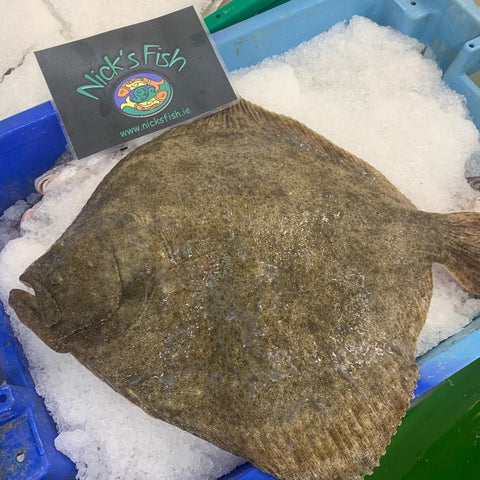 Wild Irish Turbot - Whole