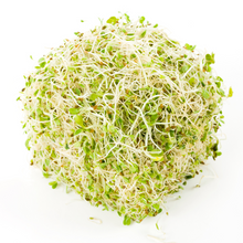 Load image into Gallery viewer, Astonishing Alfalfa- For Sprouting
