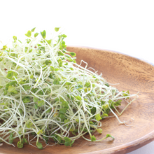 Load image into Gallery viewer, Boosting Broccoli - For Sprouting and Microgreens