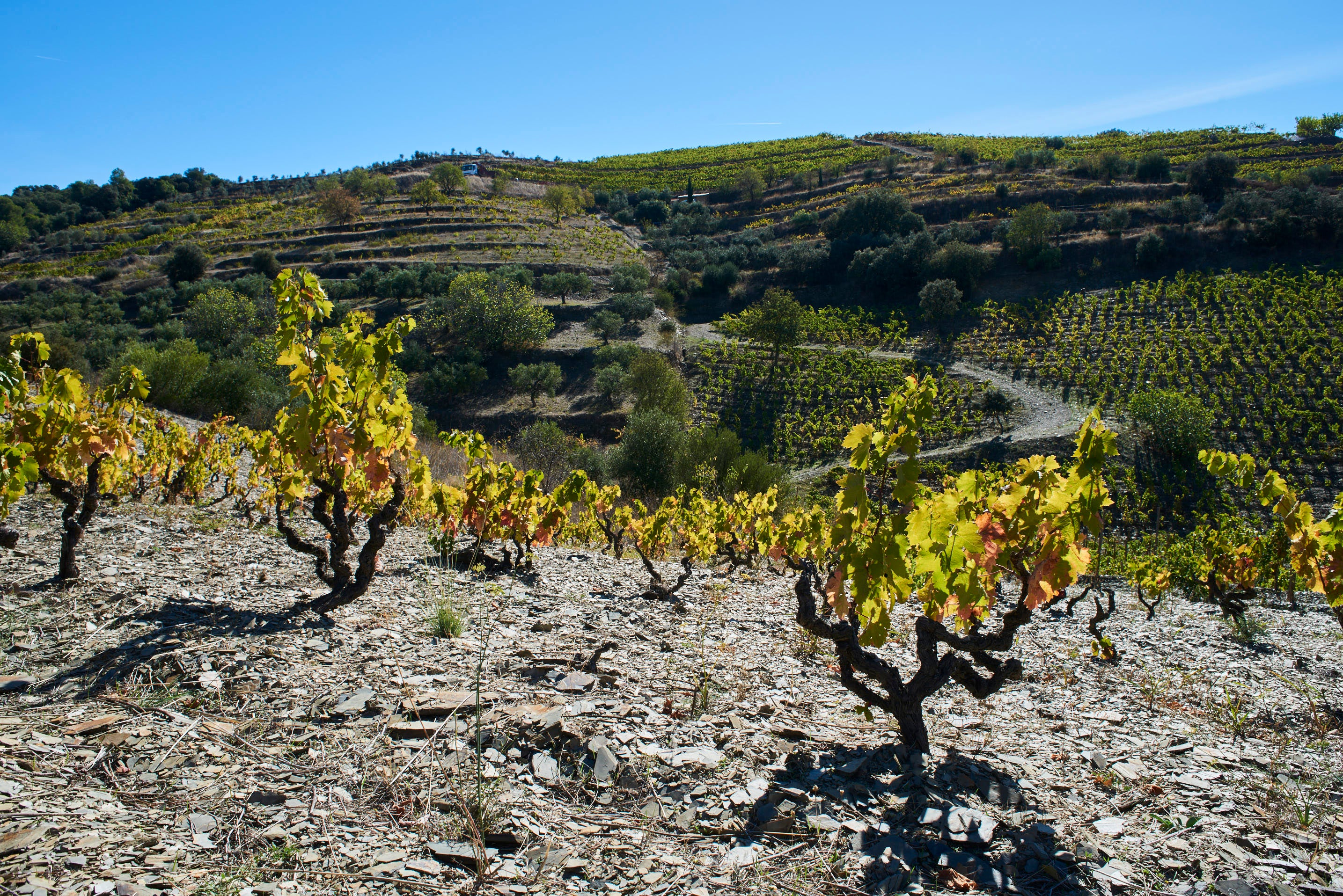 Priorat has steep vineyards and distinct licorella slate soil, but differences in picking times and winemaking result in a range of styles in the region.