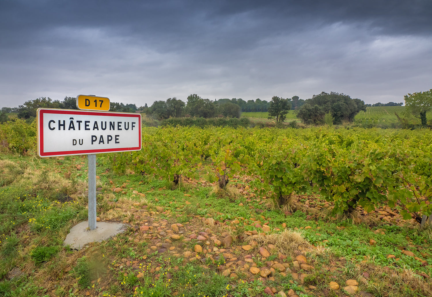 Old vines and the famous heat retaining pudding stones that contribute to the rich, spicy reds from Châteauneuf-du-Pape