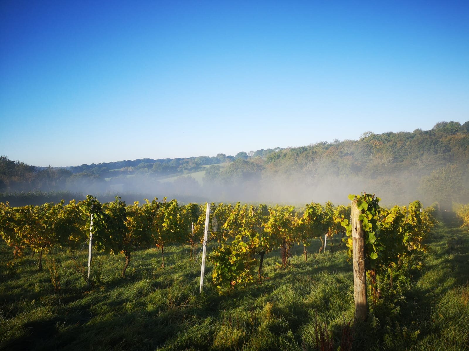 Davenport winery in Kent is farmed organically.