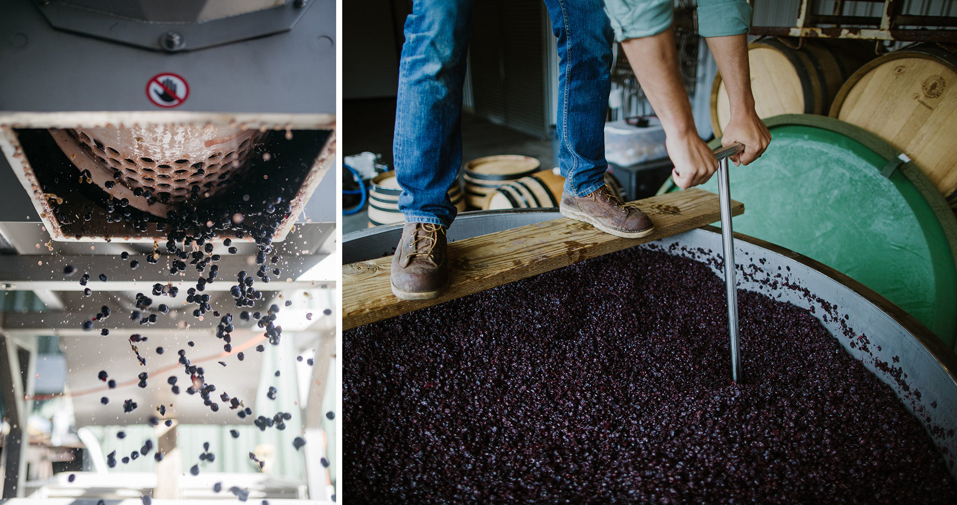 De-stemming Pinot Noir at Thousand Candles. [Photo Rick Liston] Punching down by hand.
