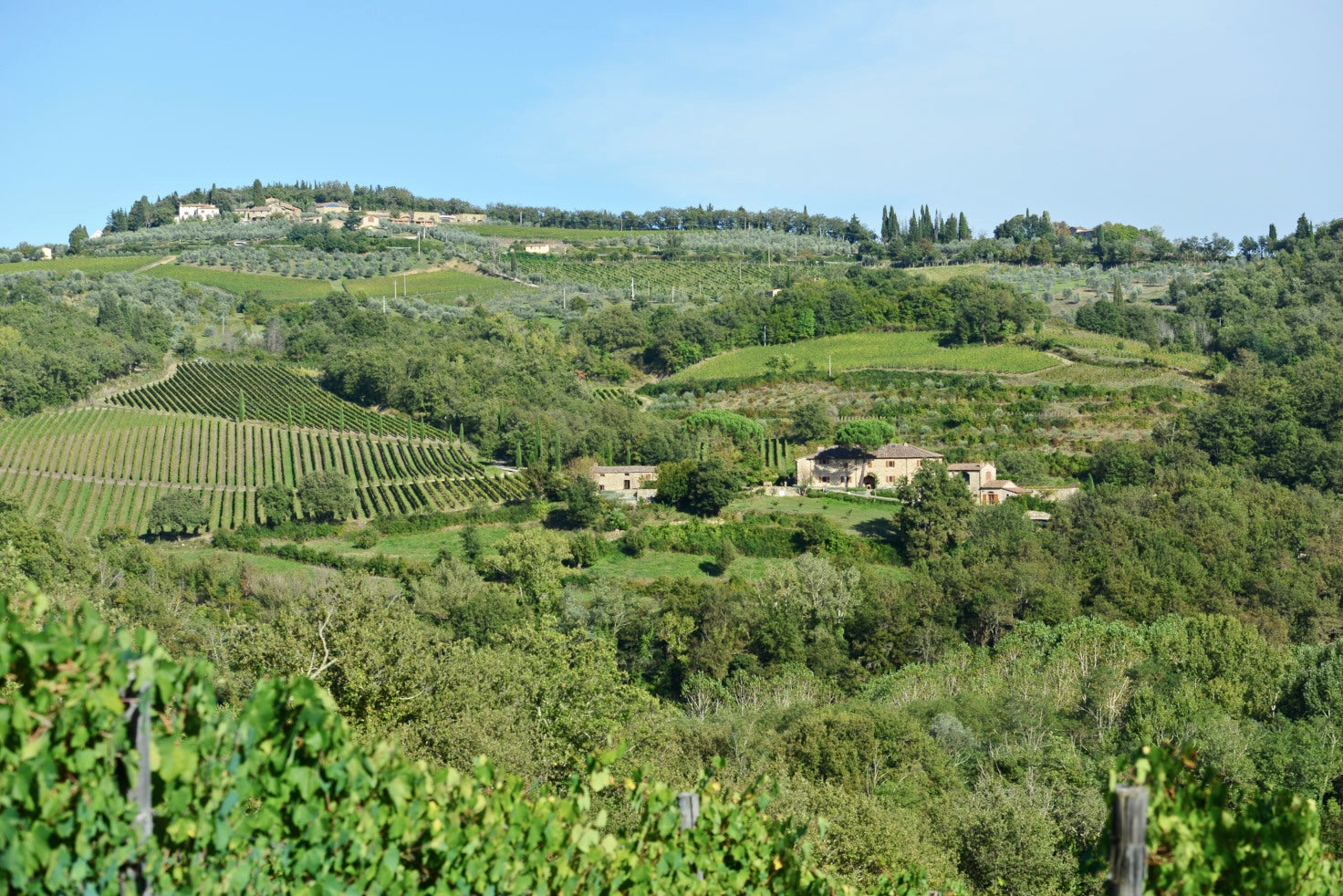View of the Candialle estate below Panzano, in the heart of Chianti Classico