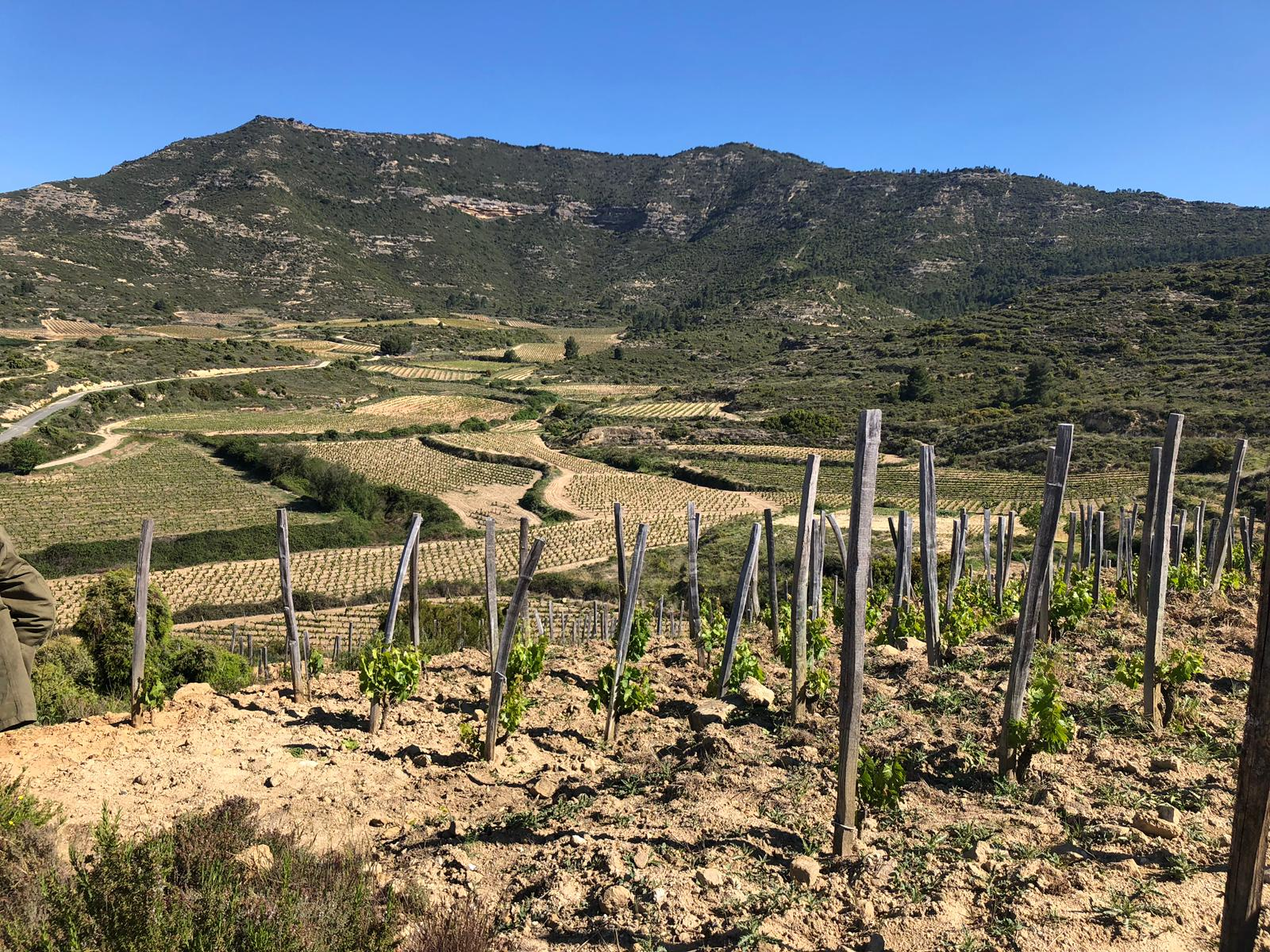 Las Beatas - a tiny 1.9 hectare plot – slowly assembled by acquiring smaller neighbouring parcels on the abandoned old terraces.