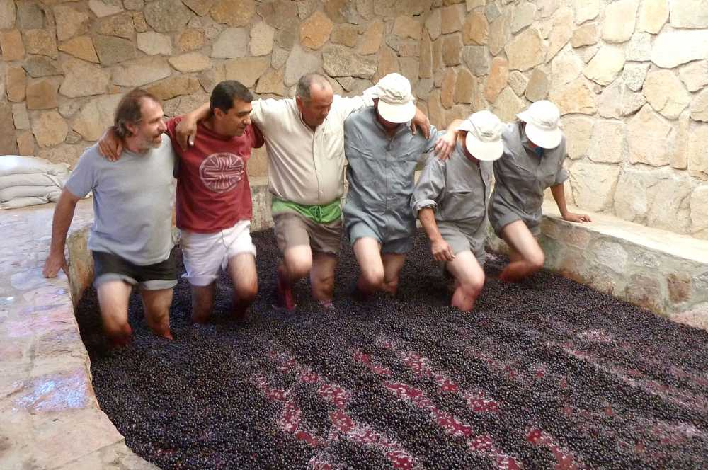 Foot treading grapes in a stone lagar at Viñedos de Alcohuaz in Chile. Treading by foot gently extracts colour from the skins