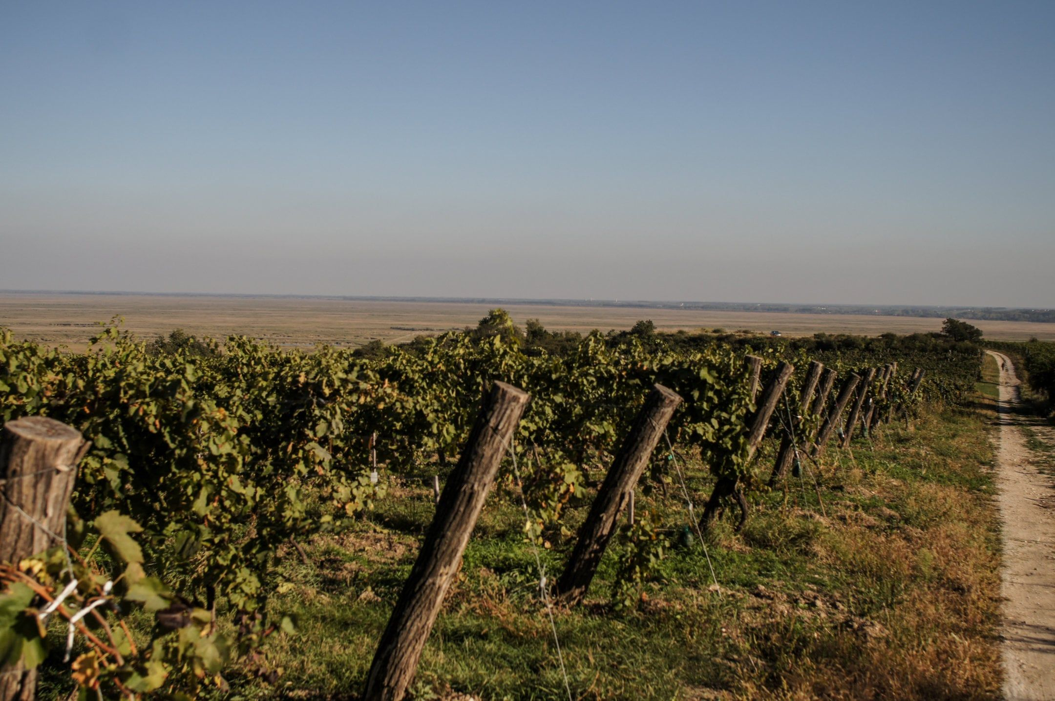 The Steiner vineyard in Sopron lies at the southwestern tip of Lake Neusiedl on a gentle, eastward-facing slope.
