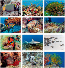 Load image into Gallery viewer, 2021 Underwater Photography Calendar