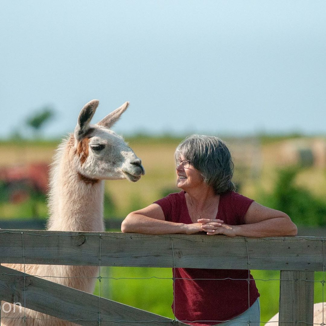 janet and the alpaca