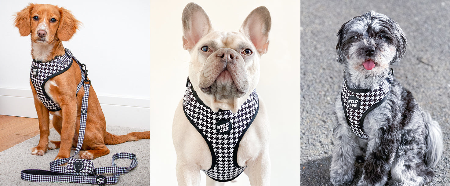 wyld-cub-adjustable-comfortable-puppy-dog-harness-lead-collar-walking-training-best-2021-MONO-BLACK-WHITE-houndstooth-dogtooth