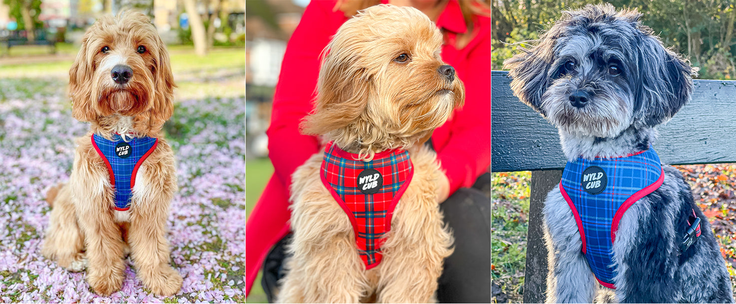 wyld-cub-reversible-adjustable-summer-puppy-dog-harness-lead-collar-walking-training-best-2021-colourful-BLUE-RED-CHECK-TARTAN