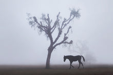 Load image into Gallery viewer, Ghost Horse