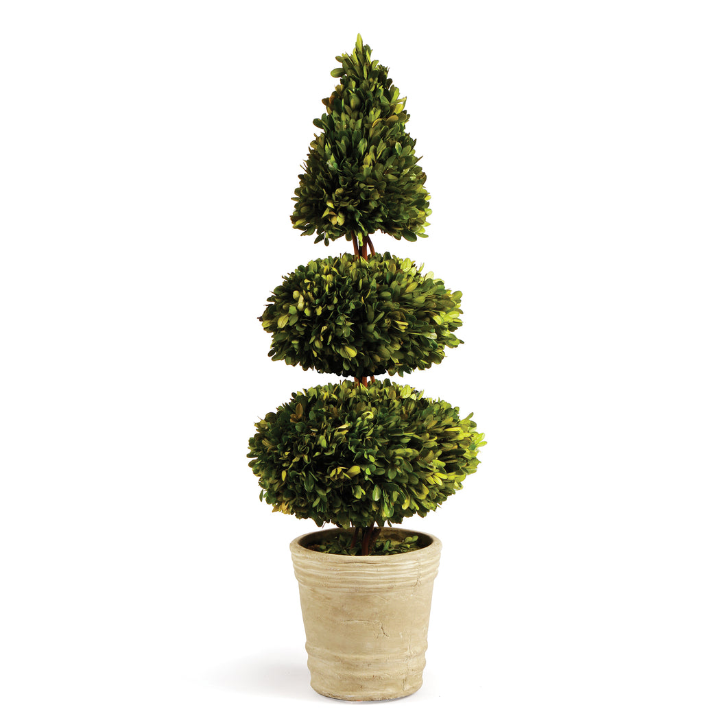 BOXWOOD DOUBLE SPHERE & CONE TOPIARY