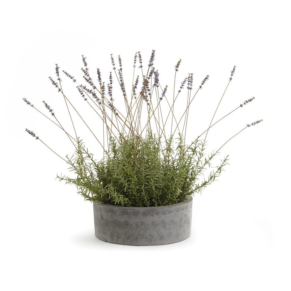 FRENCH LAVENDER IN BOWL 26