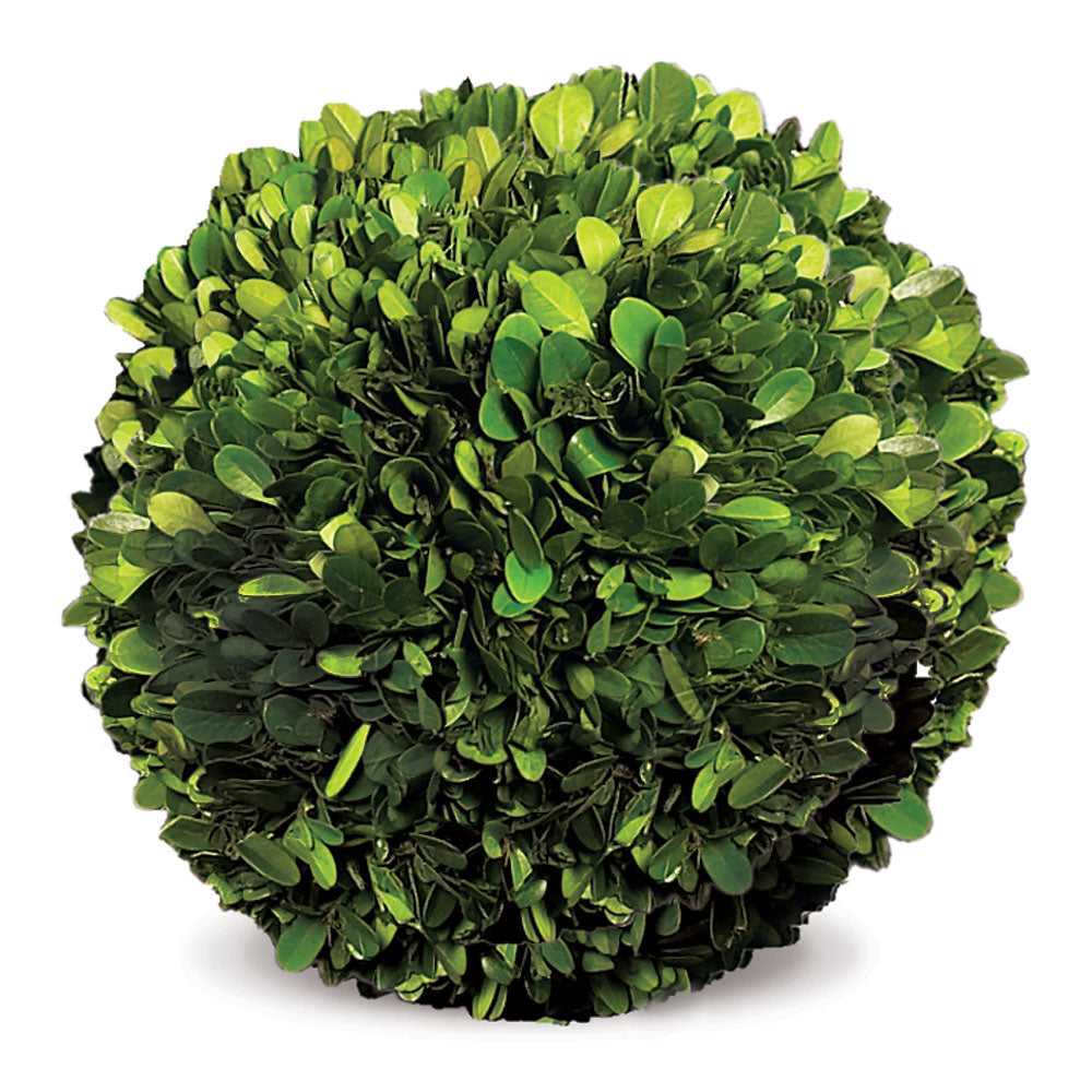 BOXWOOD BALL 8