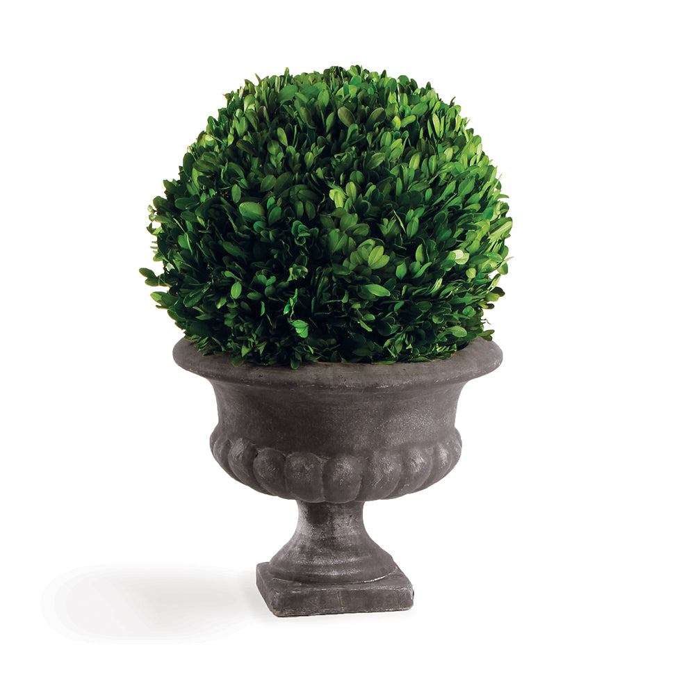 BOXWOOD BALL IN URN 12